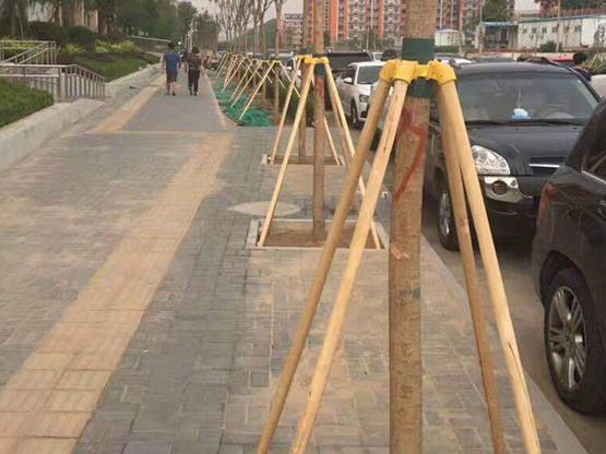 河南省商丘市市政绿化支撑施工