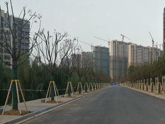山东省菏泽市市政道路绿化支撑施工