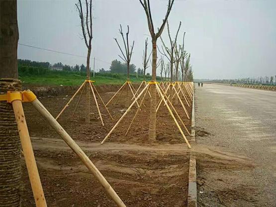 河北廊坊市开发区道路支撑工程
