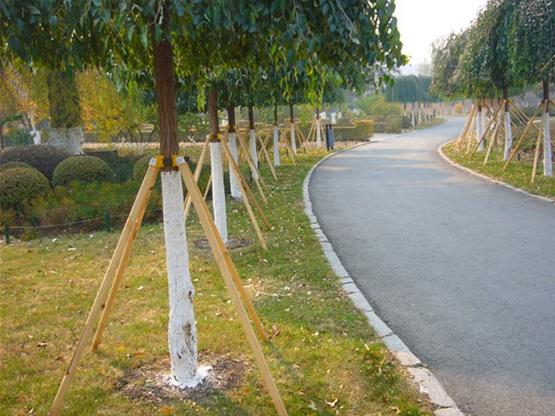 浙江温州某公园行道树支护施工