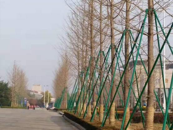 广东省深圳市前海沿海道路银杏大道支撑工程